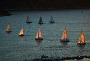tante barche